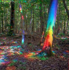 - La lumière des sous-bois en été / Lébénomasqué -