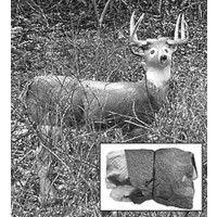 $39.99-Cherokee Hairlite Inflatable Deer Decoy