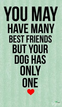 Best Inspirational Quotes About Life QUOTATION - Image : Quotes Of the day - Life Quote You may have many best friends but your dog has only one. Mans Best Friend, Best Friends, Dog Friends, Bestest Friend, Female Friends, I Love Dogs, Cute Dogs, Jiff Pom, Game Mode