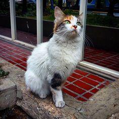 La bella Lupe..le busco un hogar..alguien la quiere adoptar?