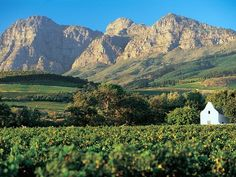 Another famous wine estate; especially for the Blanc de Noir wines and the famous buffet lunches Paises Da Africa, African Holidays, Provinces Of South Africa, South African Wine, Chili, Namibia, Cape Town South Africa, Africa Travel, Countries Of The World