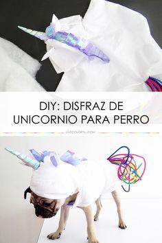 Como hacer un disfraz de unicornio ridículamente adorable para tu perro este Halloween!   LiveColorful.com/es