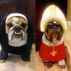 Holy Bulldogs!