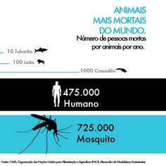 Animais mais mortais do mundo