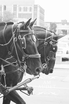 Horses in the city