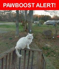 Mobile Home Park See More Please Spread The Word Casper Was Last Seen In Elon NC 27244 Nearest