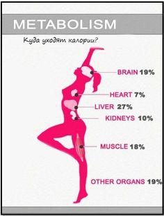 обмен веществ, куда расходуются калории