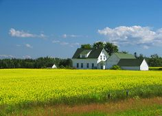 PEI, Canada. Yellow Fields, via Flickr.