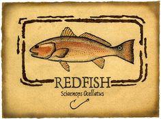 12 Best Redfish Images Saltwater Fishing Sea Angling Fishing