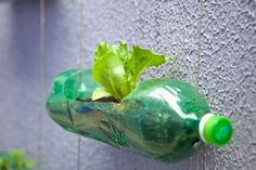 Growing plants and veggies in plastic bottles. A very clever repurpose indeed: it makes the plastic bottle less ugly anyway. Or is just a beautiful shot?