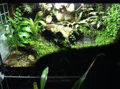 Tropical Terrarium