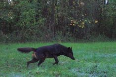 Dragon Age Characters, Black Bear, Witch, Photo And Video, Animals, Animales, American Black Bear, Animaux, Witches