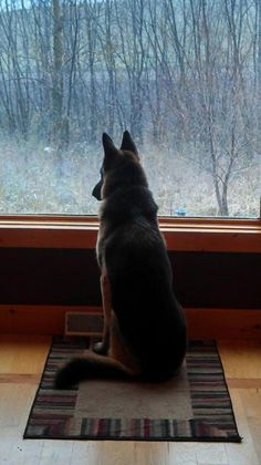 watching it snow ♡... Re-pinned by StoneArtUSA.com ~ affordable custom pet memorials for everyone.