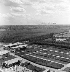 30.06.1954, Lublin, Polska Panorama miasta z Zamku. Fot. Irena Jarosińska, zbiory Ośrodka KARTA