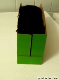 What's in the box | Gif Finder – Find and Share funny animated gifs