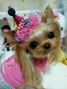 Have a fun Saturday!!  www.teacuptutucharm.com xoxo #pet #pink #diva #love #teacuptutucharm