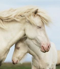 ░░▒ White mare and foal.