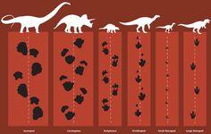 Comparing dinosaur footprints