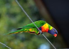 Checking out the feed dish by Howie44, via Flickr