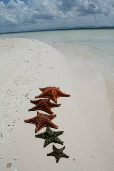 starfish . . .
