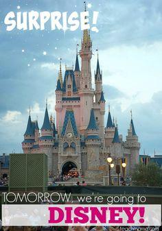 Disney SUPRISE  teac