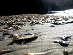 Seashell Beach in Dunedin, New Zealand