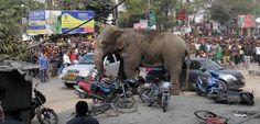 Cuando los elefantes entran en conflicto con los hombres - http://www.renovablesverdes.com/cuando-los-elefantes-entran-conflicto-los-hombres/