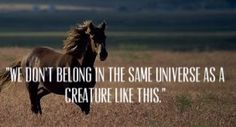 War horse quote (Loved this movie<3)
