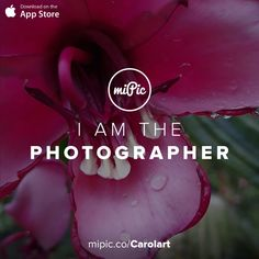 miPic is a social marketplace for artists & photographers to print, share & sell their pictures as beautiful art, fashion and lifestyle products Pink Flowers, Fashion Art, Cool Art, App, Gallery, Awesome, Artist, Check, Pictures