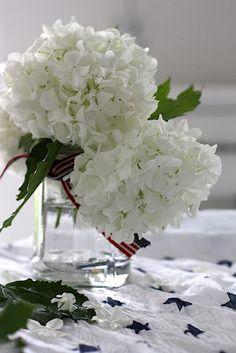 .lovely white blossoms