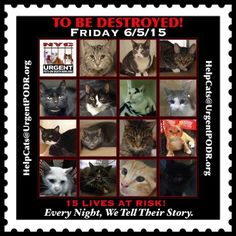** 15 TRULY GREAT CATS are going TO BE DESTROYED in NYC on Friday 06-05-15.  Please!  ADOPT * FOSTER * SHARE * PLEDGE for RESCUE *  And for Goodness Sake - Spay & Neuter your Companion Animals!