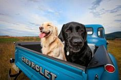 Dogs in a Chevy! Doesn't get any better!