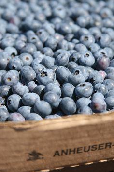 blueberries Farmer's Market, Collinsville, Connecticut http://www.thenewenglandkitchen.com