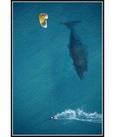 kite surfing with whale below