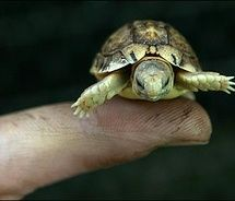Teeny turtle is so cute! Why are tiny things so cute?!