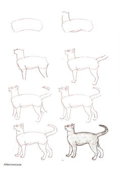 Cat drawing tutorial