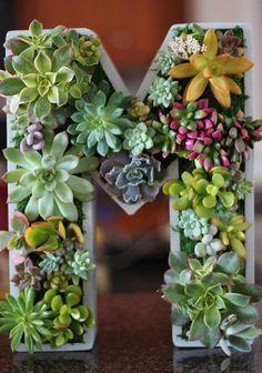 M字型の鉢に寄せ植えされた多肉植物。色や大きさがバラバラの多肉植物ですが、配置のセンスがバツグンですね!