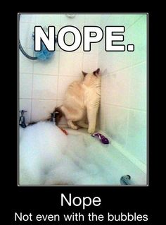 Image from http://giantgag.net/wp-content/uploads/2013/11/nope-nope-not-even-with-the-bubbles-funny-cat-bath.jpg.