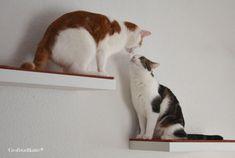 Mini-#Kletterwand für Katzen und #Catwalk