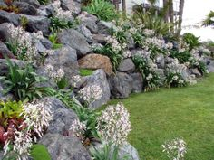 Nz Native Planting Rock Wall Landscape Gardens Retaining