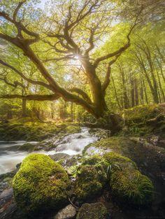 Enchanted tree by Daniel Korzhonov on 500px