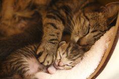 Mom & baby cats