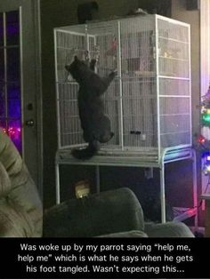 A funny parrot can be so cute. Check out these funny parrot videos. Contains some funny parrots dancing, some funny parrots talking or better said, imitating, Cute Funny Animals, Funny Animal Pictures, Funny Cute, Best Funny Pictures, Cute Cats, Adorable Kittens, Funny Kitties, Funny Pics, Funny Stuff