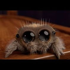 Spider Named Lucas Is So Cute, Even Arachnophobes Will Smile Adorable Animated Spider Named Lucas Is So Cute, Even Arachnophobes Will Smile Cute Fantasy Creatures, Cute Creatures, Beautiful Creatures, Lucas The Spider, Animated Spider, Blobfish, Chesire Cat, Jumping Spider, Beautiful Bugs