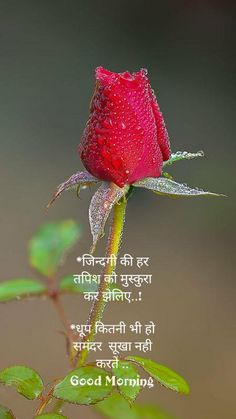Vijay R Chakarwarti - + Good Morning Hindi Messages, Morning Prayer Quotes, Good Morning Roses, Good Morning Beautiful Quotes, Good Morning Prayer, Morning Greetings Quotes, Morning Inspirational Quotes, Morning Blessings, Morning Msg