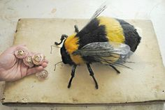 Mister Finch Here's the first Bumble bee Ive ever made......I have a few more nearly finished so hopefully will have a very small number to sell soon. I really wanted to make them as often as the moths but they have been very very problematic! Getting them to the stage has been really tricky and getting the right colours for the fur alone was very hard. I really needed to see the project out and have come back to them again and again for weeks now.