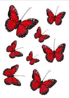 - 56 X Ruby Red Butterflies Mixed Sizes Wedding Birthday Cake Toppers Edible & Garden Red Wallpaper, Butterfly Wallpaper, Purple Butterfly, Blue Butterfly, Photo Wall Collage, Picture Wall, Rose Drawing Tattoo, Tattoo Ink, Tattoos