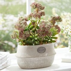Kunstpflanze Topfblume Country Flower #landhaus #landhauslook #country  #businessinterior #romantik #