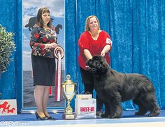 Overseas: #Newfoundlands triumph at #Vaasa #dogs #dogshows #dogshowing