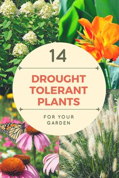 Save water, time, and money by planting flowers and shrubs that are drought-tolerant. These hardy and forgiving plants will grow and thrive no matter what the weather brings.